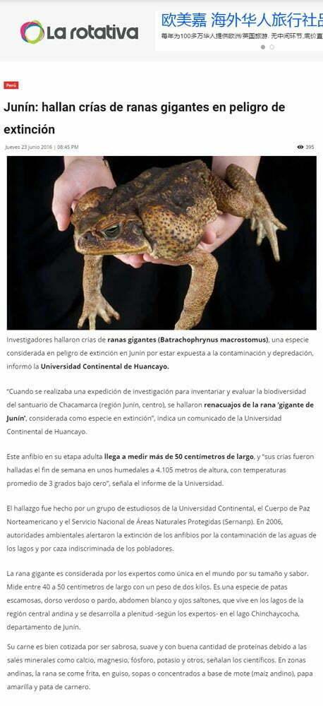 Junin-hallan-cris-de-ranas-gigantes-en-peligro-de-extincion