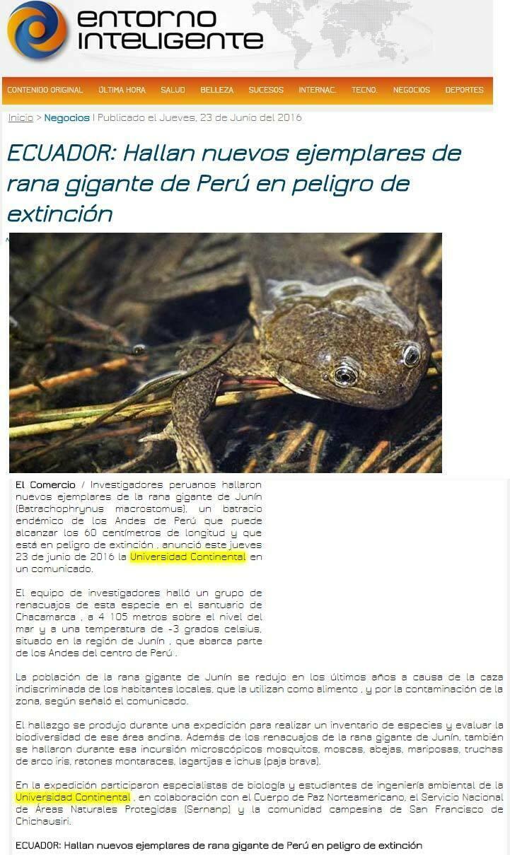 ecuador-hallan-nuevos-ejemplares-de-rana-gigante-de-peru-en-peligro-de-extincion-abc