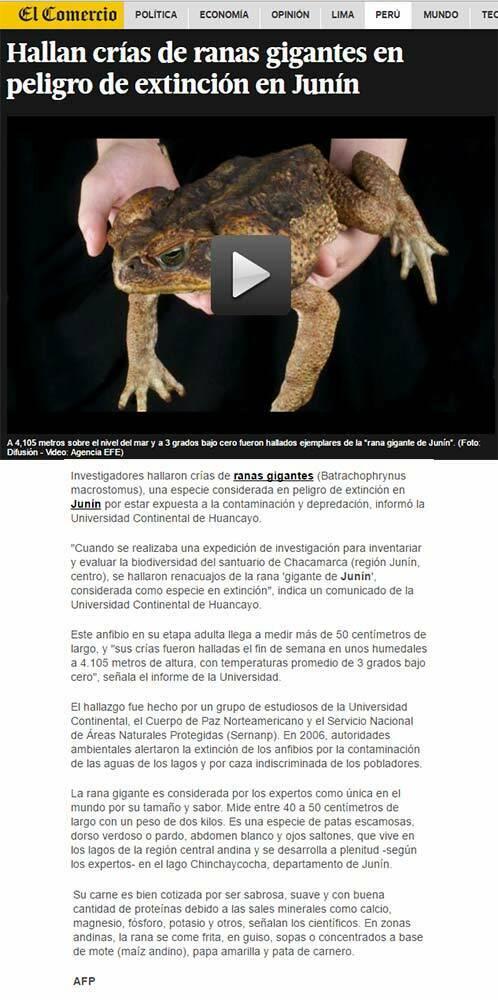 hallan-crias-de-ranas-gigantes-en-peligro-de-extincion-en-junin