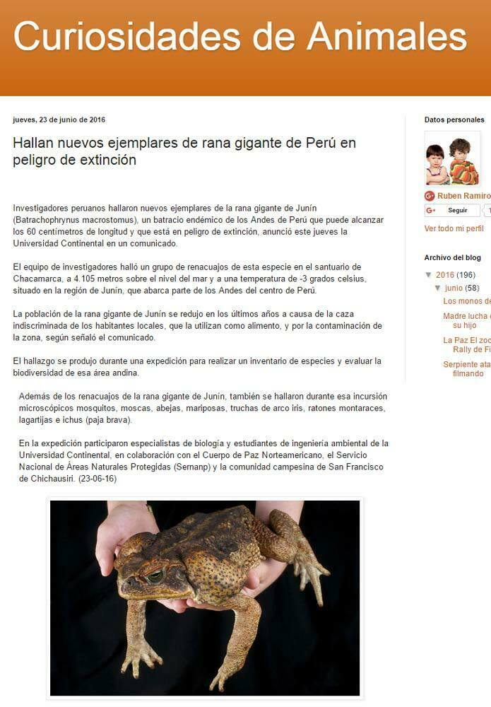 hallan-nuevos-ejemplares-de-rana-gigante-de-peru-en-peligro-de-extincion-curiosidades-animales