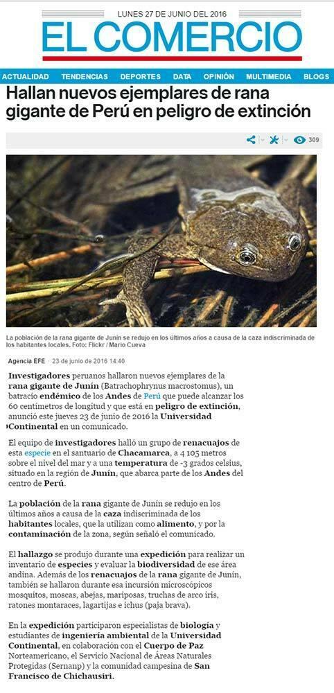 hallan-nuevos-ejemplares-de-rana-gigante-de-peru-en-peligro-de-extincion-el-comercio