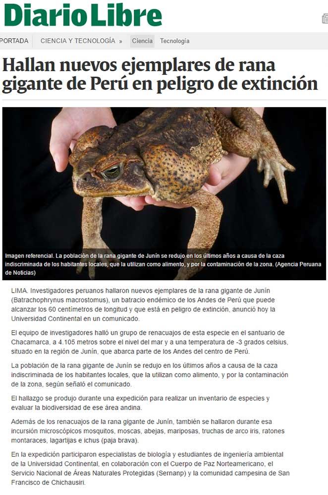 hallan-nuevos-ejemplares-de-rana-gigante-de-peru-en-peligro-de-extincion-el-diario-libre