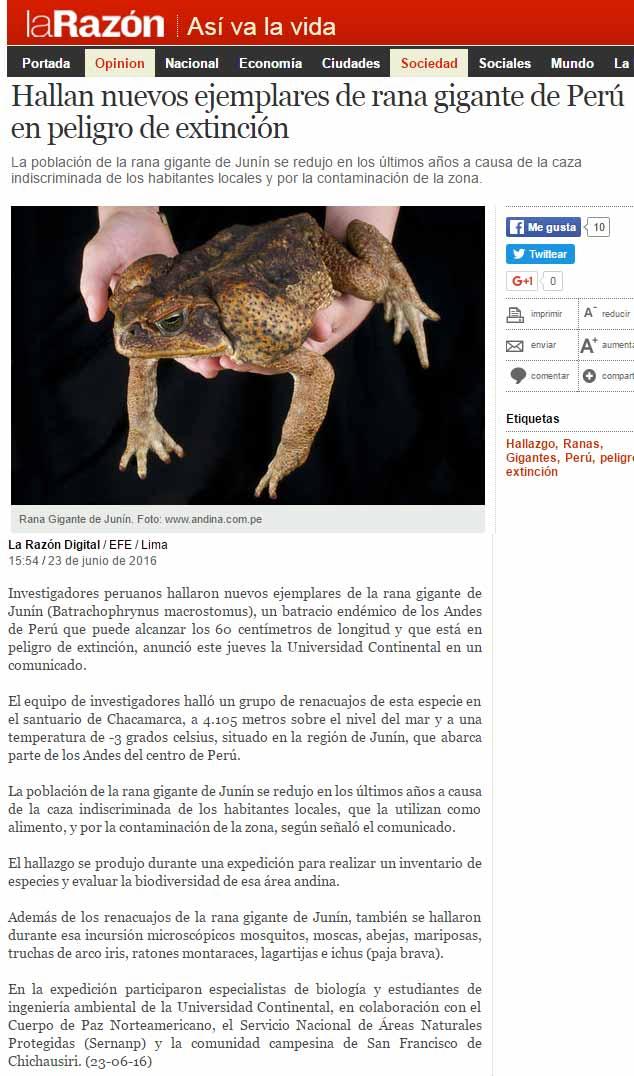 hallan-nuevos-ejemplares-de-rana-gigante-de-peru-en-peligro-de-extincion-razon