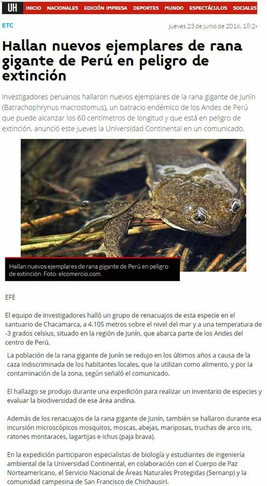 hallan-nuevos-ejemplares-de-rana-gigante-de-peru-en-peligro-de-extincion-ultima-hora