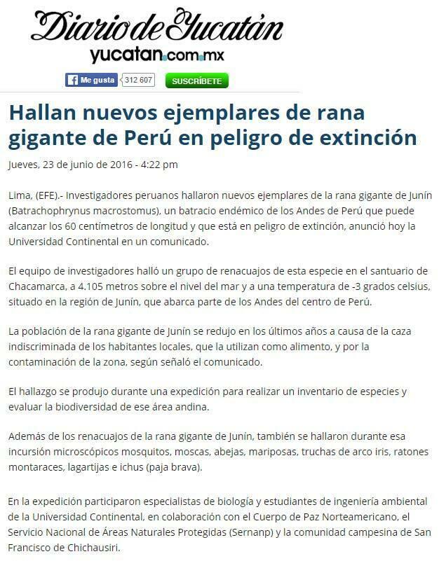 hallan-nuevos-ejemplares-de-rana-gigante-de-peru-en-peligro-de-extincion-yucutam