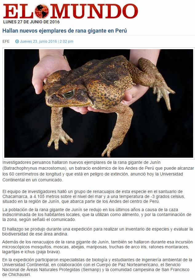 hallan-nuevos-ejemplares-de-rana-gigante-en-peru