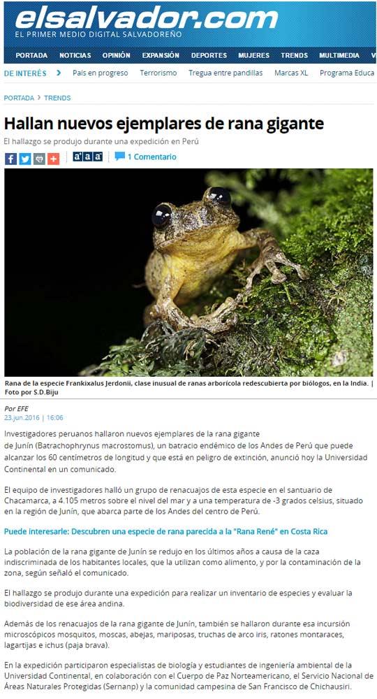 hallan-nuevos-ejemplares-de-rana-gigante