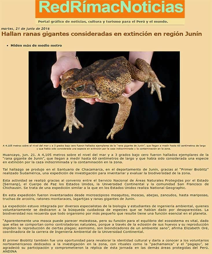 hallan-ranas-gigantes-consideradas-en-extincion-en-region-junin-1