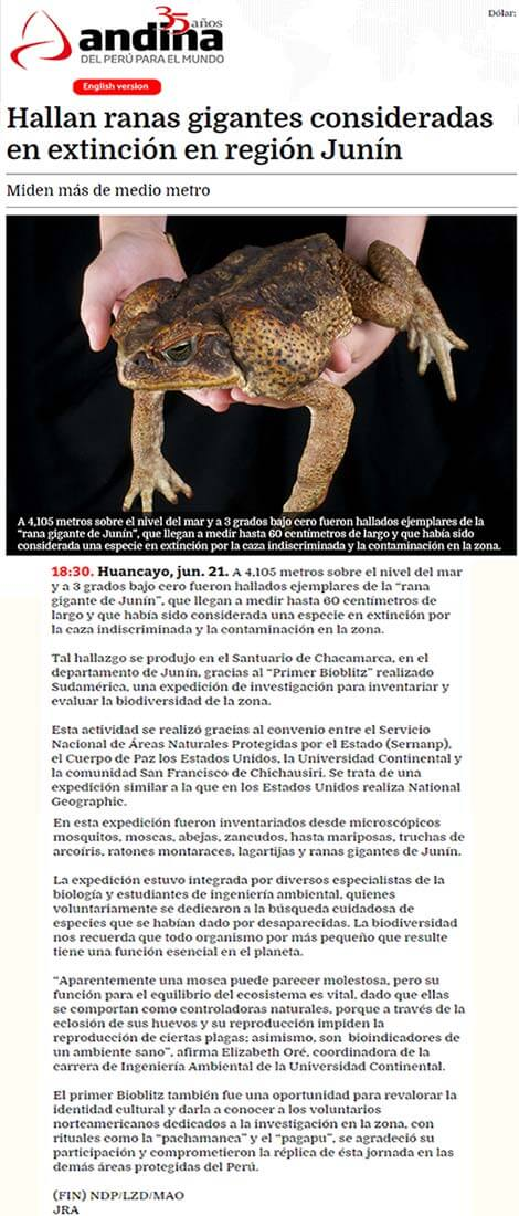 hallan-ranas-gigantes-consideradas-en-extincion-en-region-junin