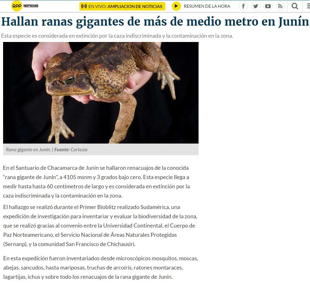 hallan-ranas-gigantes-de-mas-de-medio-metro-en-junin