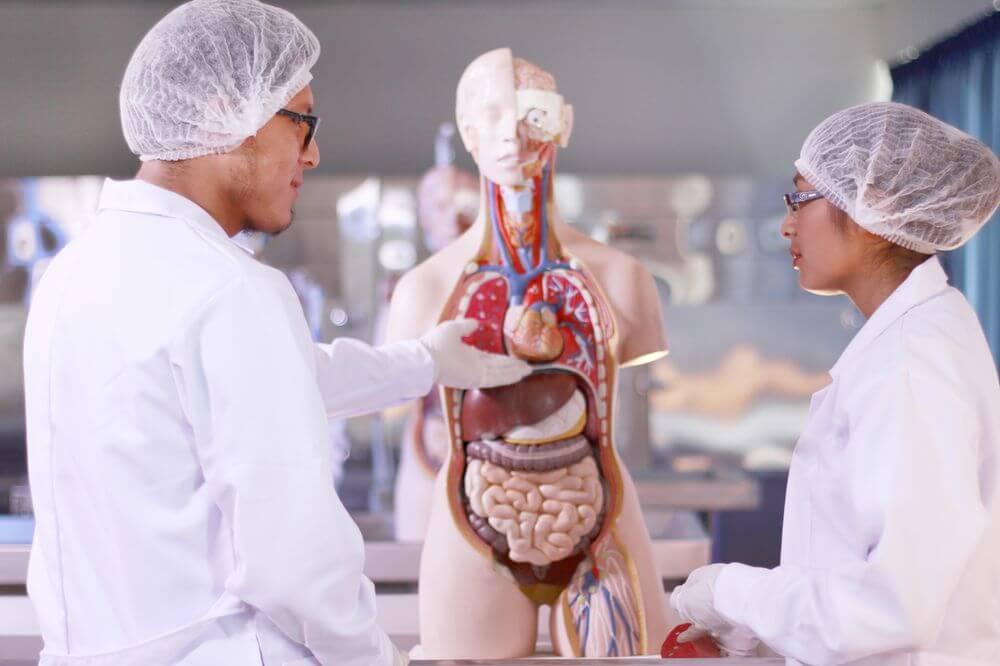 Prácticas con los simuladores anatómicos de medicina