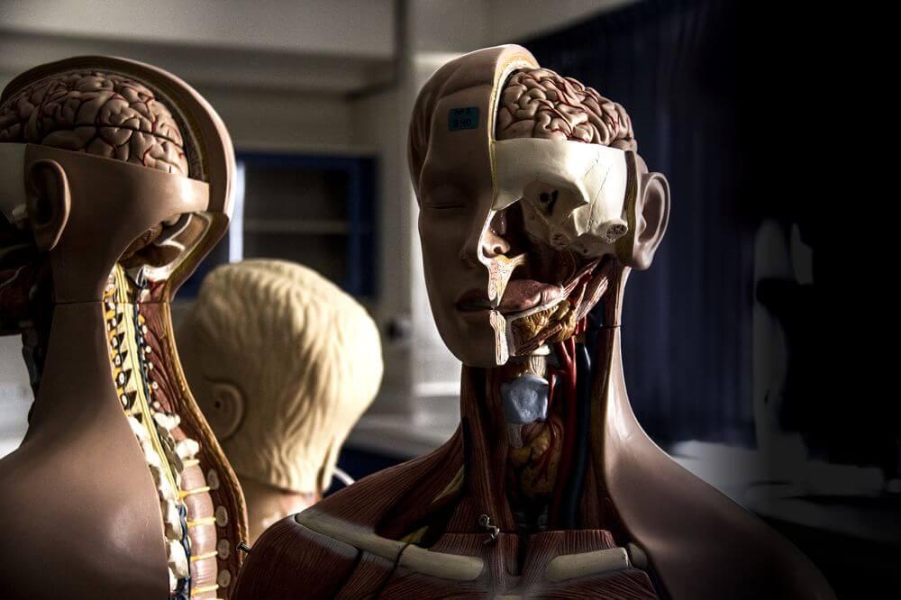 Laboratorio de Anatomía - Universidad Continental